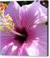 Hybiscus Smile Acrylic Print