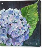Hydrangea And Water Droplet Acrylic Print