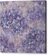 Hydrangea Blossom Abstract 1 Acrylic Print