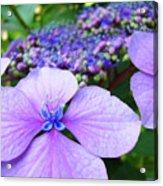 Hydrangea Flowers Art Prints Hydrangea Garden Giclee Art Prints Baslee Troutman Acrylic Print