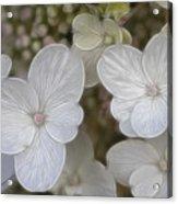 Hydrangea Fractalius Acrylic Print