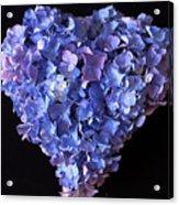 Hydrangea Heart Acrylic Print