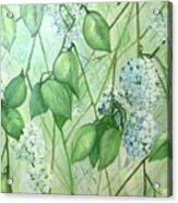 Hydrangea In Green Acrylic Print
