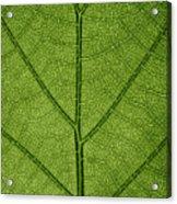 Hydrangea Leaf Acrylic Print