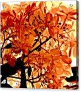 Hydrangea Macro In Autumn Acrylic Print