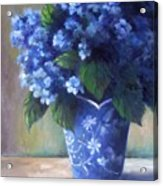 Hydrangea Study Acrylic Print