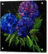 Hydrangeas 66 Acrylic Print