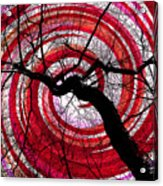 Hypnotic Nature Acrylic Print