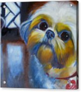 I Am A Therapy Dog Acrylic Print