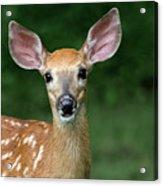 I Am All Ears Acrylic Print