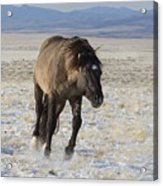 I Am Going After Her Acrylic Print by Nicole Markmann Nelson