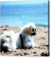 I Am King Of This Beach Acrylic Print