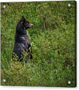 I Am So Handsome Acrylic Print