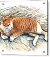 I Am Tiger Acrylic Print