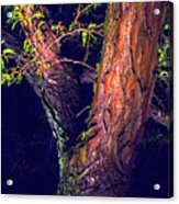 I Am Tree Acrylic Print