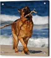 I Got It - German Shepherd Dog Acrylic Print