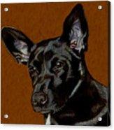 I Hear Ya - Dog Painting Acrylic Print