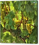 I Heard It On The Grapevine Acrylic Print