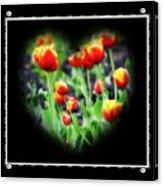 I Heart Tulips - Black Background Acrylic Print