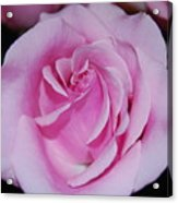 I Just Love Pink  Acrylic Print