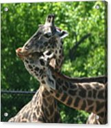 I Just Love Tall Spotted And Handsome Acrylic Print