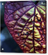I Leaf You Acrylic Print