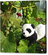 I Love Grapes Says The Panda Acrylic Print