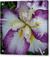 I Love Iris Acrylic Print