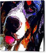 I Love Mountain Dogs Acrylic Print