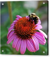 I Love Pollen And Pollen Loves Me Acrylic Print