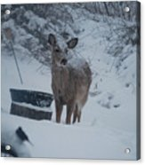 I Love Snow Acrylic Print