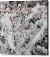 I Love Winter Acrylic Print