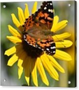 I Love Your Nectar Acrylic Print