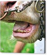 I Need To See My Dentist Acrylic Print by Kaye Menner