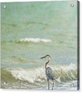 I Saw The Heron Standing Acrylic Print