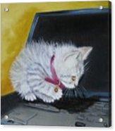 I See A Mouse Acrylic Print