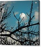I See The Moon Acrylic Print