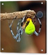 I See You Spider Acrylic Print