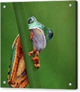 I See You - Tiger Leg Monkey Frog Acrylic Print