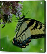 I Want To Be A Butterfly Acrylic Print