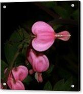 I Want To Bloom My Way Acrylic Print