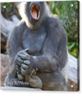 I Want To Sing..... Acrylic Print