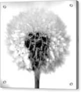I Wish In Black And White Acrylic Print