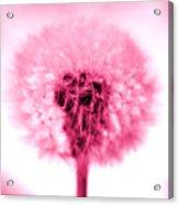 I Wish In Pink Acrylic Print
