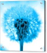 I Wish In Turquoise Acrylic Print