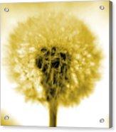 I Wish In Yellow Gold Acrylic Print