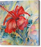 Ibiscus Acrylic Print