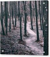 Ice Age Trail Near Lapham Peak Acrylic Print