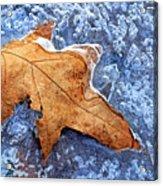Ice-bound Leaf Acrylic Print