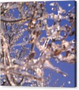 Ice Branches Acrylic Print